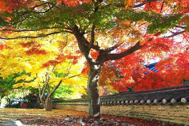 Busan - Hàn Quốc mùa thu lãng mạn